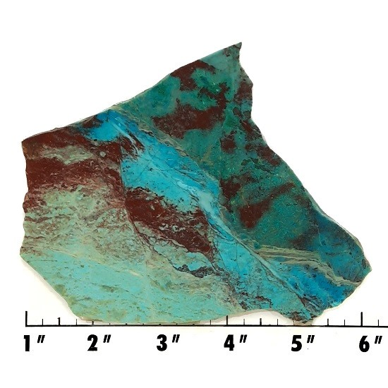 Slab1528 - Parrot Wing Chrysocolla slab