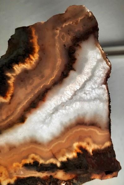 Slab1059 - Prudent Man Plume Agate Slab