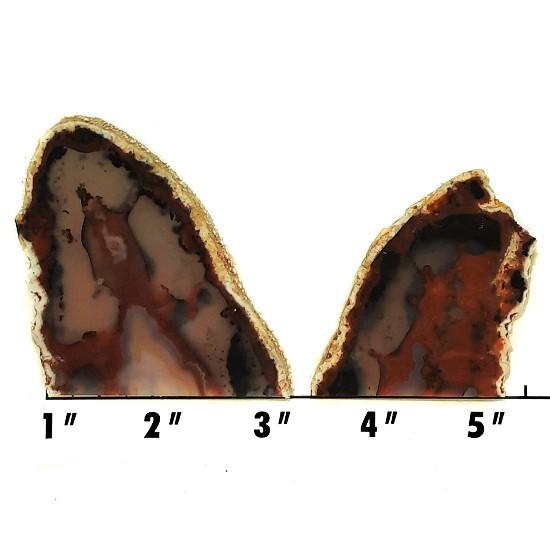 Slab1735 - Piranha Agate slabs