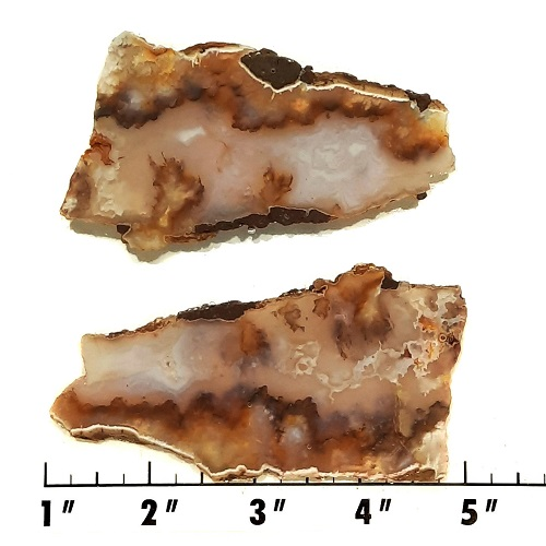 Slab2045 - Graveyard Point Plume Agate slabs