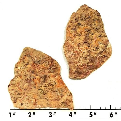 Slab2049 - Graveyard Point Plume Agate slabs