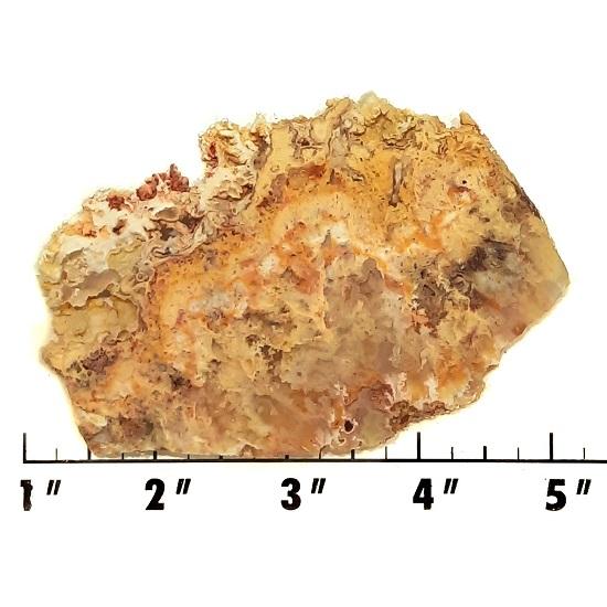 Slab2078 - Graveyard Point Plume Agate slab