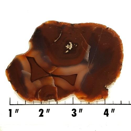 Slab699 - Piranha Agate Slab