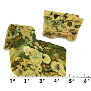 Slab1726 - Rainforest Jasper Slabs