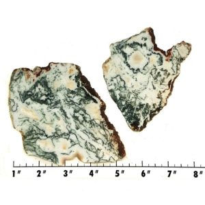 Slab1696 - Tree Agate slabs