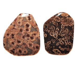 Turtle Jasper Cabochons from China