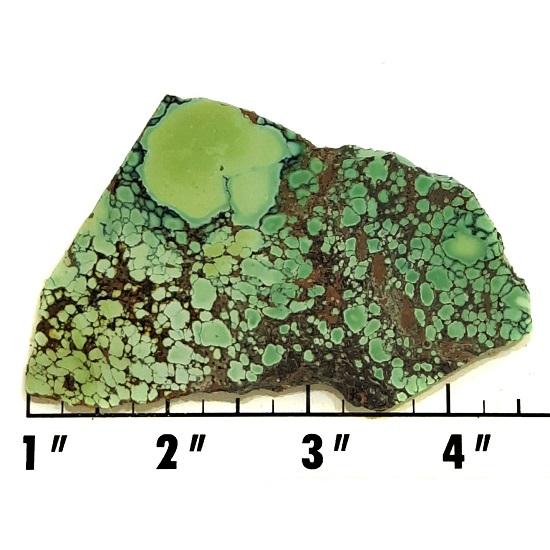 Slab1018 - Natural Peacock Turquoise slab