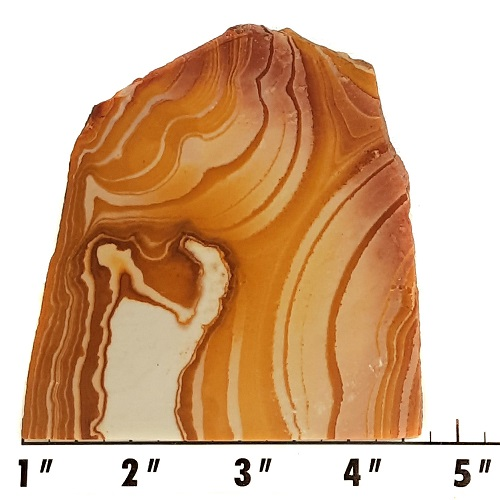 Slab637 - Wonderstone Rhyolite Slab