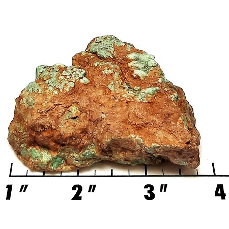 Battle Mountain Turquoise Rough #11