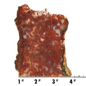 Slab1097 - Bloody Basin Agate Slab