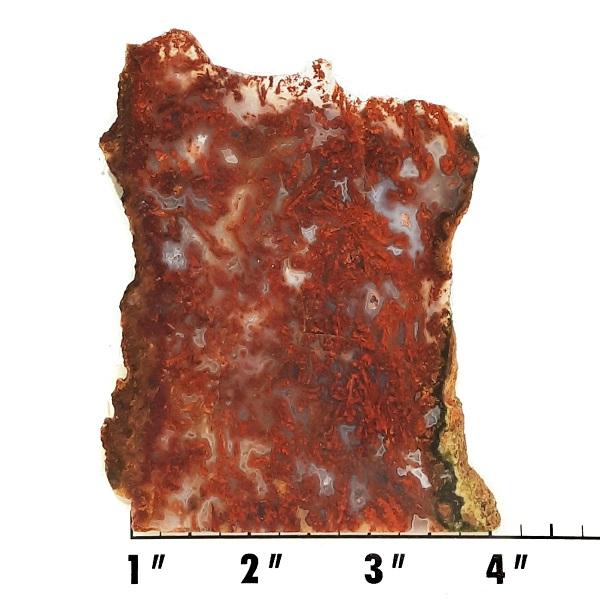 Slab1097 - Bloody Basin Agate Slab
