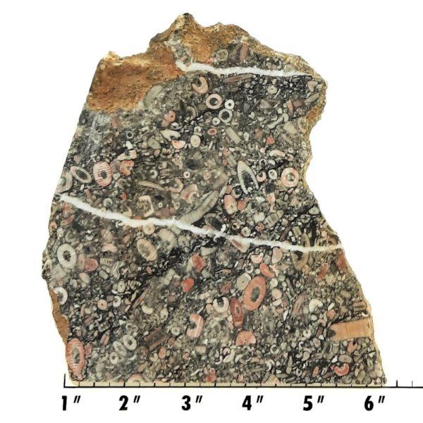 Slab1993 - Crinoid Marble Slab