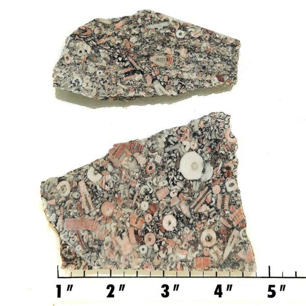 Slab1950 - Crinoid Marble Slabs