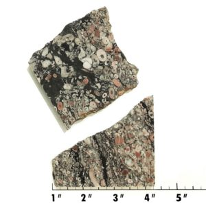Slab1958 - Crinoid Marble Slabs