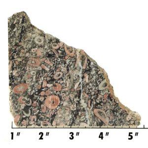 Slab1975 - Crinoid Marble Slab