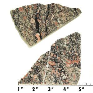 Slab1985 - Crinoid Marble Slabs