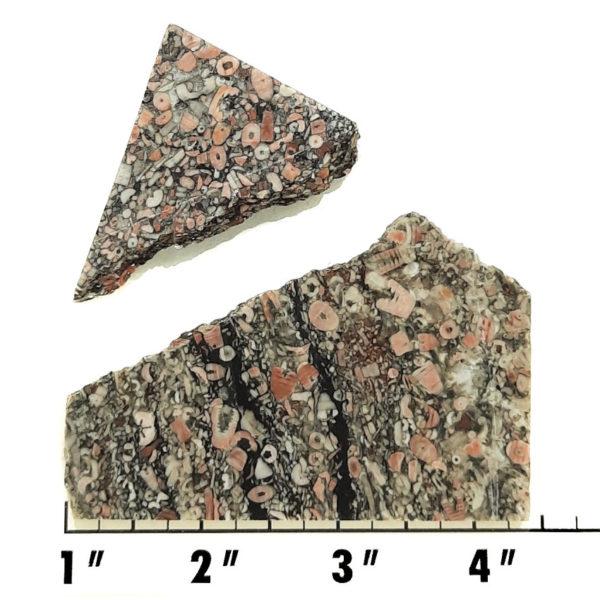 Slab1940 - Crinoid Marble Slabs