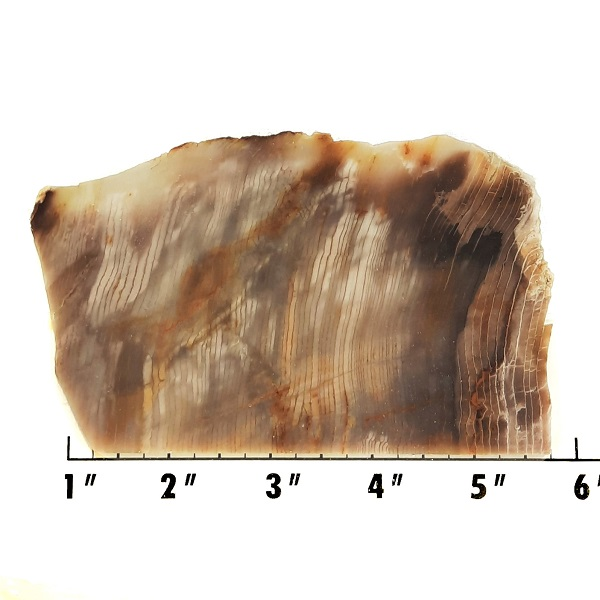 Slab2003 - Opalized Wood Slab
