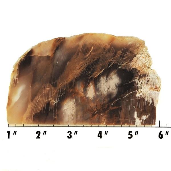 Slab199 - Opalized Wood Slab