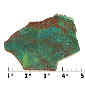 Slab1839 - Parrot Wing Chrysocolla Slab
