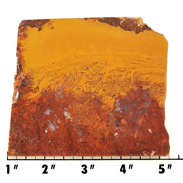 Slab1296 - Rooster Tail Agate slab