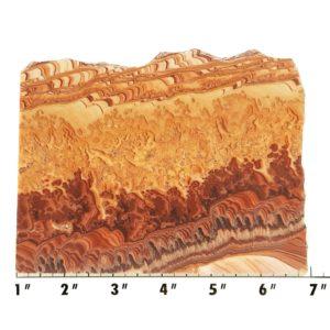 Slab1210 - Rolling Hills Dolomite Slab