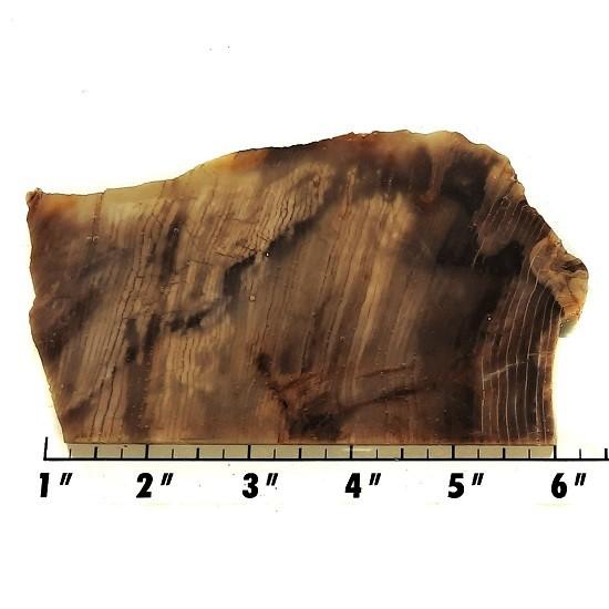 Slab248 - Opalized Wood Slab