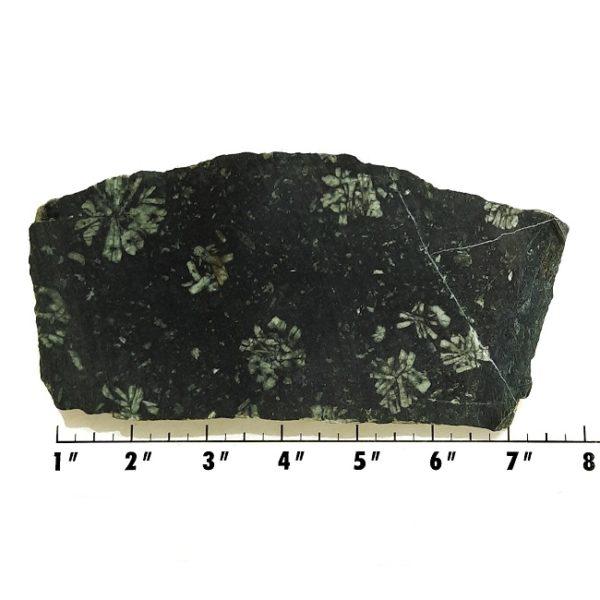 Slab466 - Flowerstone Slab