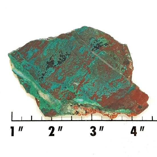 Slab318 - Parrot Wing Chrysocolla Slab