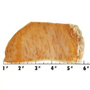 Slab487 - Petrified Palm Slab