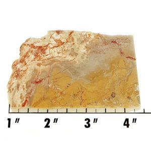 Slab697 - Coprolite (Fossilized Dinosaur Dung) Slab