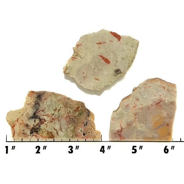 Slab675 - Coprolite (Fossilized Dinosaur Dung) Slabs