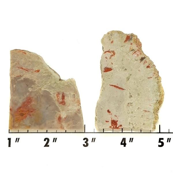 Slab676 - Coprolite (Fossilized Dinosaur Dung) Slabs