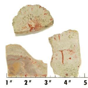 Slab682 - Coprolite (Fossilized Dinosaur Dung) Slabs