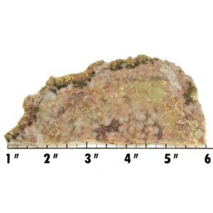 Slab704 - Coprolite (Fossilized Dinosaur Dung) Slab
