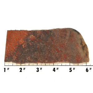 Slab710 - Dinosaur Bone slab
