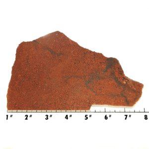 Slab713 - Dinosaur Bone slab