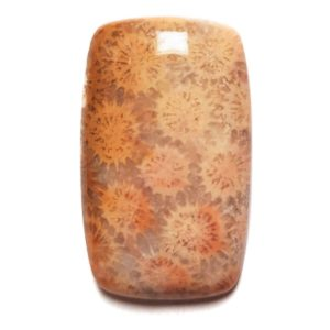 Cab2250 - Petrified Coral Cabochon