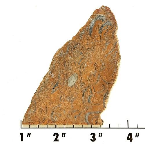 Slab97 - Clam Chowder Stone Slabs