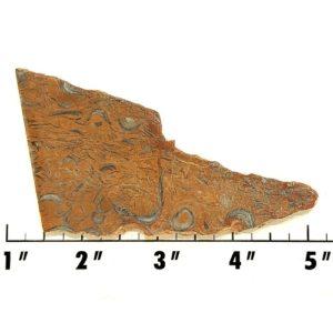 Slab974 - Clam Chowder Stone Slab