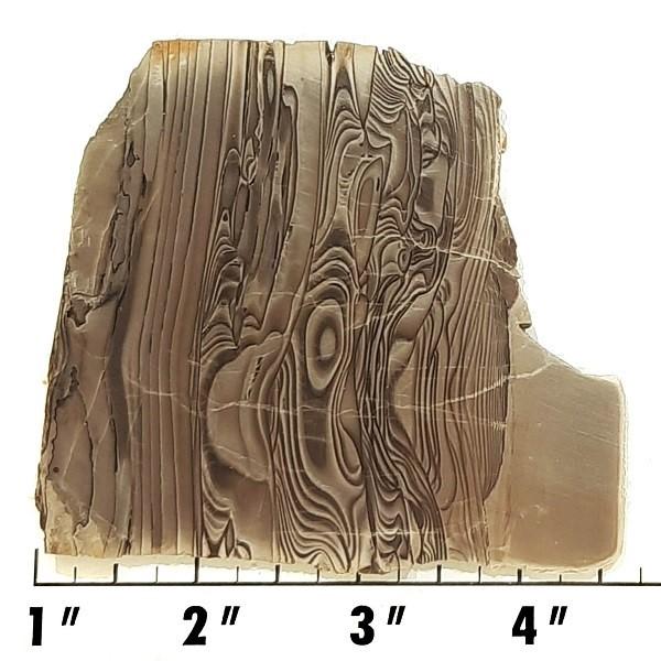 Slab1037 - Swiss Coffee Jasper Slab