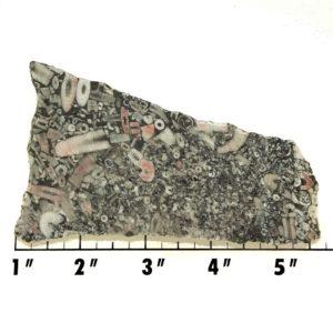Slab829 - Crinoid Marble Slab