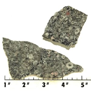 Slab831 - Crinoid Marble Slabs