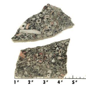Slab835 - Crinoid Marble Slabs