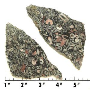 Slab837 - Crinoid Marble Slabs