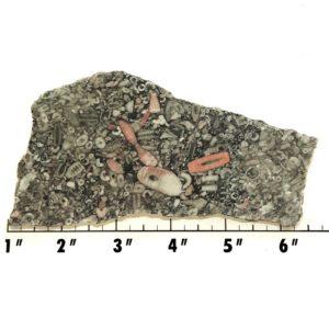 Slab840 - Crinoid Marble Slab
