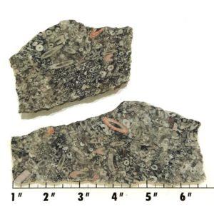 Slab849 - Crinoid Marble Slabs