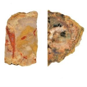 Coprolite Slabs from the Colorado/Utah border area