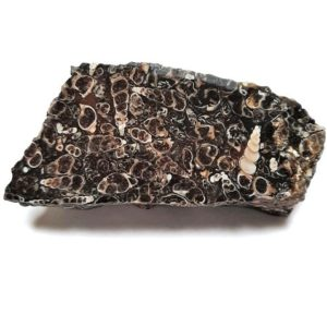 Turritella (Fossil Stone) Rough from Wyoming - $7.50/lb