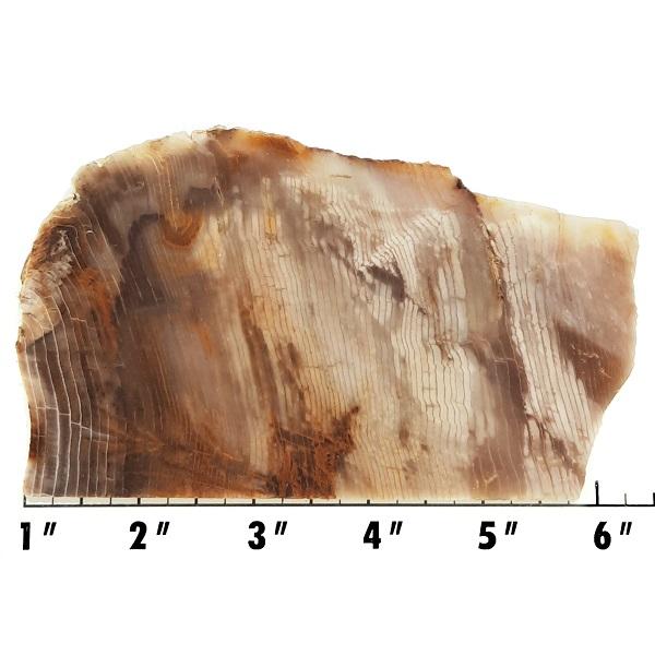 Slab1510 - Opalized Wood Slab